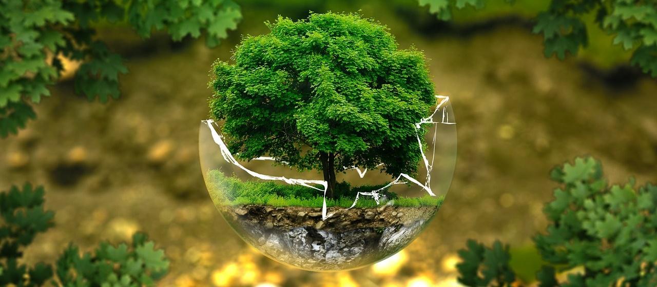 Strom v skle