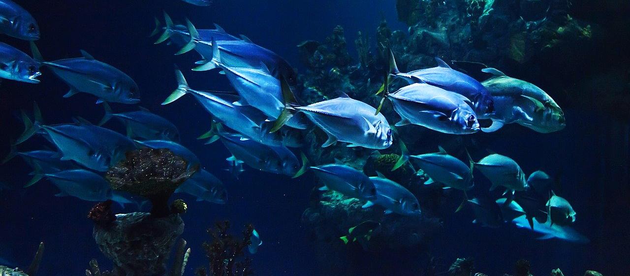 podmorsky svet robotika robot tunabot
