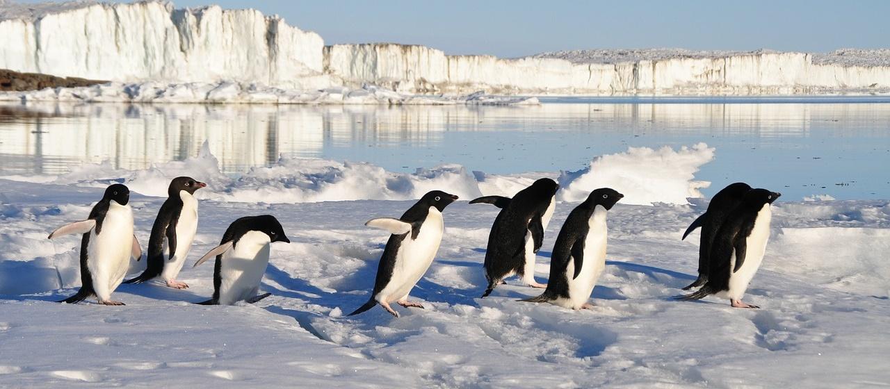tucniaky detekcia umela inteligencia penguins counting AI