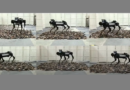 MELA robotic dog robot pes